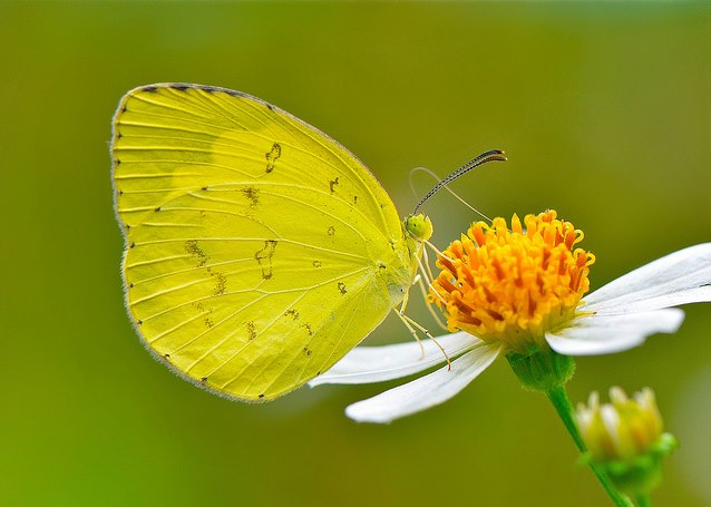butterfly on yellow color - photo #6
